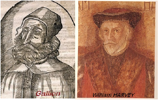 gallien-a-harvey