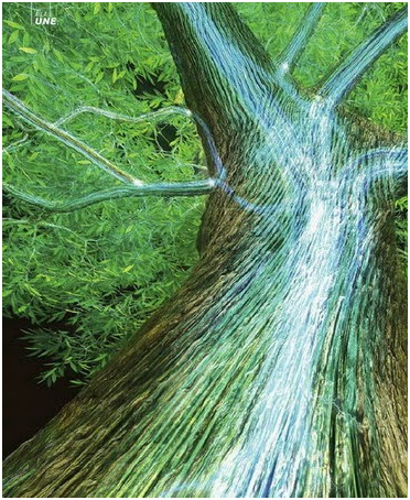 energie-arbre