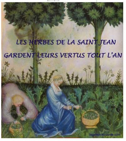 herbes-de-la-saint-jean