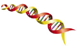 ADN partie 1