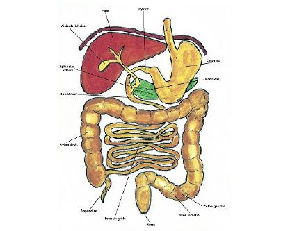 colon gauche