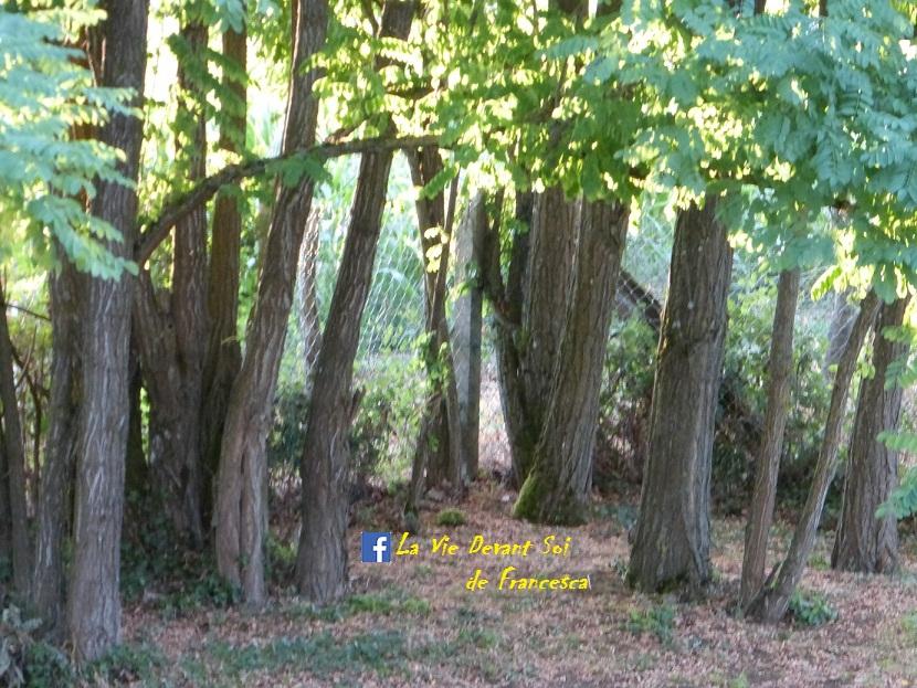 Nature sous-bois