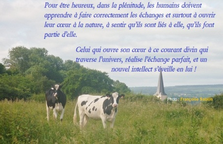 2 vaches