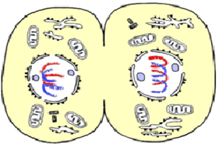 structure celllulaire